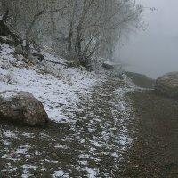 В тумане седой осени :: Екатерина Торганская