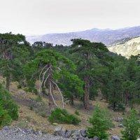 Кипрский пейзаж с горы Олимп. :: Виктор Куприянов