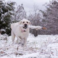 Зимние забавы. :: Alena Nuke