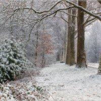 Чародейкою Зимою Околдован, лес стоит . :: Юрий. Шмаков