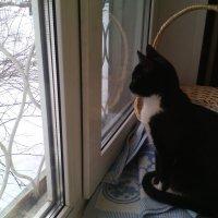 А, за окном, а за окном... :: Ольга Кривых