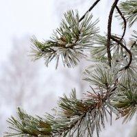 Холодно. :: Андрий Майковский