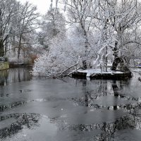 Зимний пруд :: Valentina M.