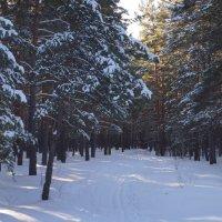 просто зима... :: Alexandr Staroverov