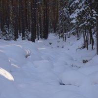 сосновый бор... зима :: Alexandr Staroverov