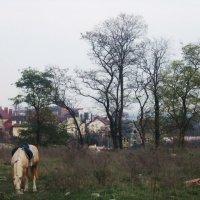 Дачный поселок :: татьяна
