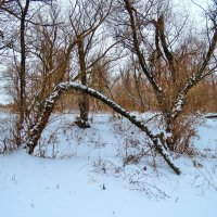 Зимний лес. :: Aleksey Litovchenko