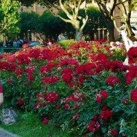 Блондинки и розы... :: Sergey Gordoff