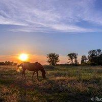 Все разнотравье вечерней зари степь выстилает под ноги коню... :: Сергей