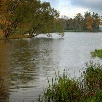Осень в  Екатерининском парке :: Наталья