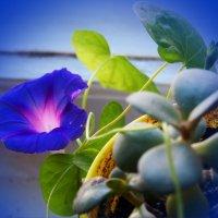 Неожиданная весна  в цветочном горшке на зимнем подоконнике....) :: Любовь К.