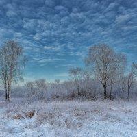 Морозная тишина :: Владимир Колесников
