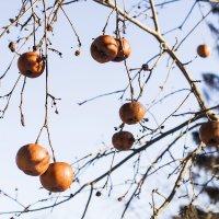 Зимнее яблоки :: Владислав Карпович