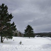 Сосны в горах :: Алексей