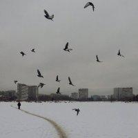 Пусть летят они, летят :: Андрей Лукьянов