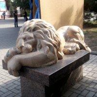 Царь зверей :: Svetlana Lyaxovich