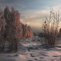 Утреннее солнце нежными лучами... :: Александр Попов