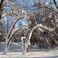 снег :: Олег