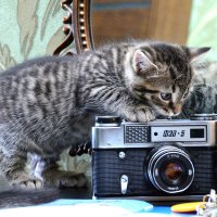 Юный фотограф... :: донченко александр
