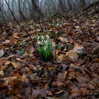 первые шаги весны :: Николай Ковтун