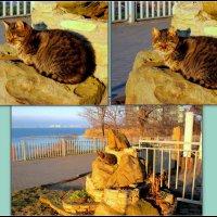 Анапская кошка :: Нина Бутко