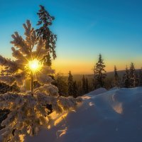 Утреннее солнышко :: vladimir Bormotov