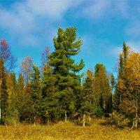 Горный лес :: Сергей Чиняев
