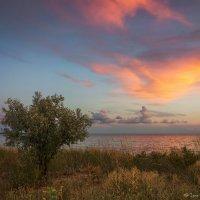 Вечер на берегу Азовского моря :: Игорь Сарапулов
