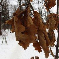 Золотая осень в феврале :: Андрей Лукьянов