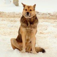 Пёс Бывалый :: Александр Прокудин
