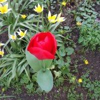 Ранней весной :: Svetlana Lyaxovich