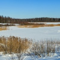 Следы на замёрзшем озере :: Милешкин Владимир Алексеевич
