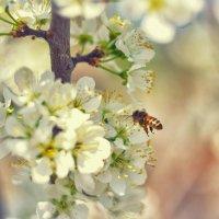 Пчёлка :: Денис Качанов