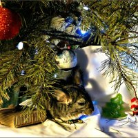 Классика Новогоднего жанра... :: Кай-8 (Ярослав) Забелин