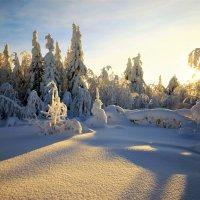 Утро на лесной полянке :: Анатолий