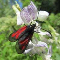 Мотылек и цветок :: Galaelina ***
