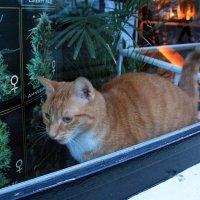Кот, любитель ЛСД.../Посетитель, или владелец Кофешопа?;-) :: Olga