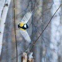 почти орел :: Александр Катаев