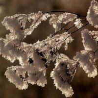 цветы Мороза :: Александр Прокудин