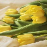 Желтые тюльпаны... :: Лариса Н