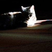 мисс свет+темнота :: Роза Бара