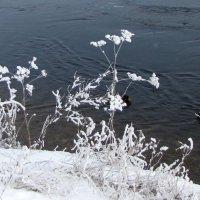 У реки :: veera (veerra)