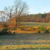 Осень давняя :: Николай Танаев
