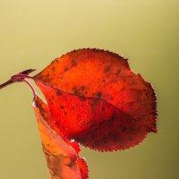 Осенний лист... :: Sergey Apinis