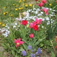 Скорее бы весна!!! :: Светлана Масленникова