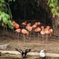 Не мешайте спать Фламинго :: Наталия Горюнова