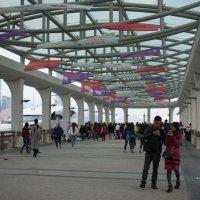 Hong Kong. One of the central piers :: Sofia Rakitskaia