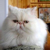 Самый лучший котя! :: Чария Зоя