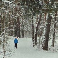 В зимнем лесу! :: Владимир Шошин