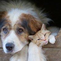 жил-был пес... и кот )) :: валя